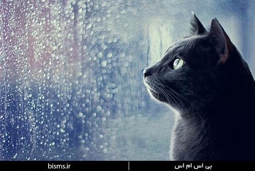 جملات زیبا ویژه روزهای بارونی