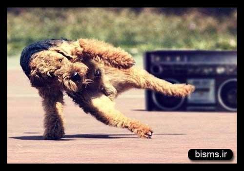 رقص حیوانات