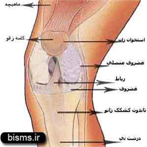 روشهای طبیعی برای درمان زانو درد